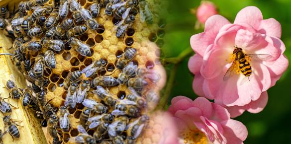 abejas parfums propoleo